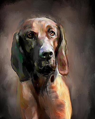 Hannoveransk Viltsporhund