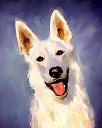 Hvit gjeterhund (korth)