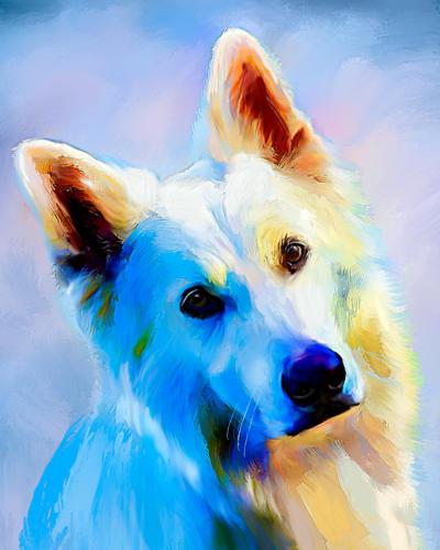 Hvit gjeterhund (langh)