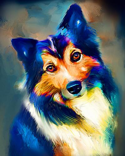 Islandshund