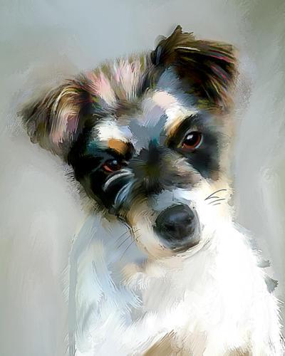 Jack Russel Terrier (broken)