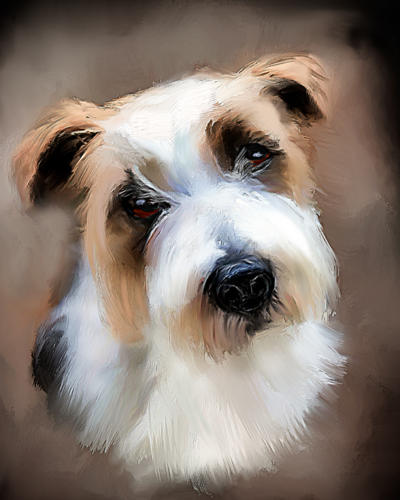 Jack Russel Terrier (stri)