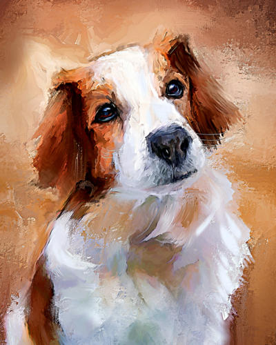 Kooikerhund